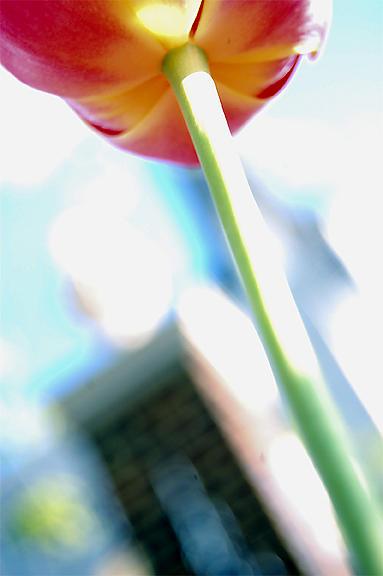 Nature Photograph - Blurred Beauty by Kristin Britt