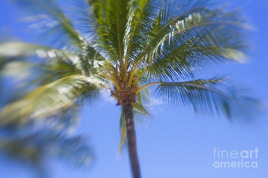 Blue Photograph - Blurry Palms by Ron Dahlquist - Printscapes