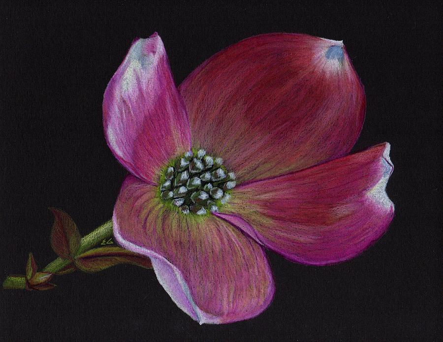 Dogwood Drawing - Glamor by Ekta Gupta