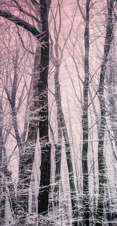 Snowy Woods Photograph - Blush Of Dawn Il by Susan Maxwell Schmidt