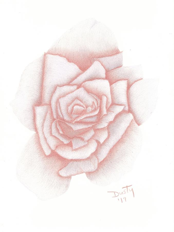 Rose Drawing - Blushing by Dusty Reed