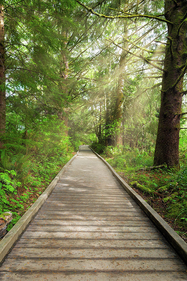 Hiking Photograph - Boardwalk along Hiking Trail at Fort Clatsop by David Gn