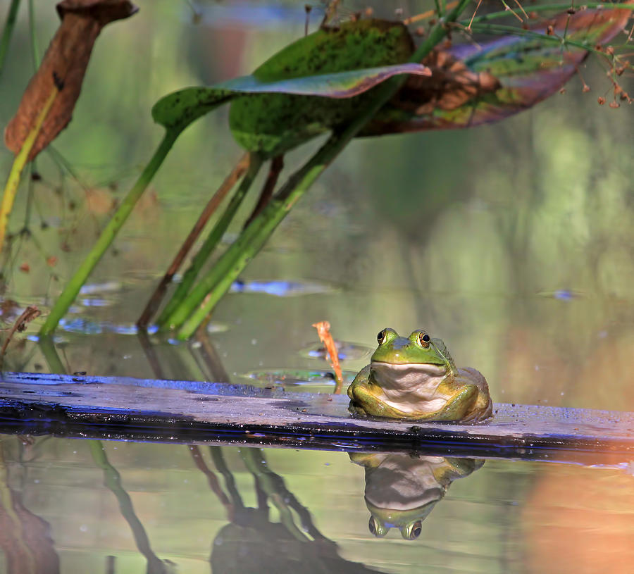 Bullfrog Photograph - Boardwalk by Donna Kennedy