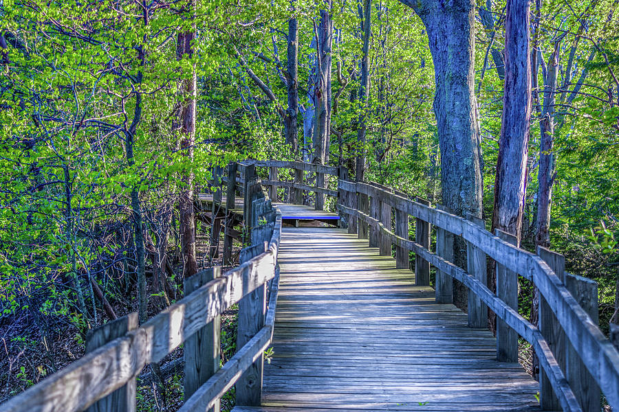 Boardwalk Going Into the Woods by Lester Plank