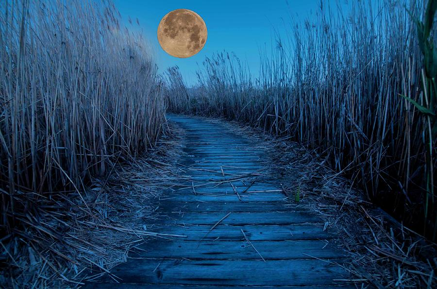 Boardwalk Moon Photograph by Norman Hall