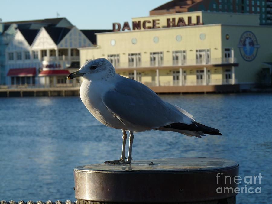 Boardwalk Seagull Photograph