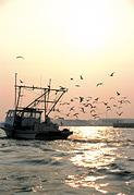 Shrimp Photograph - Boat At Dawn by Joy Carlsen