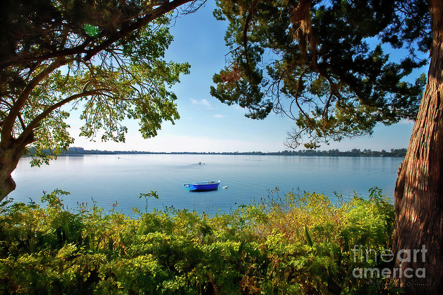 Boat Framed By Trees And Foliage Photograph