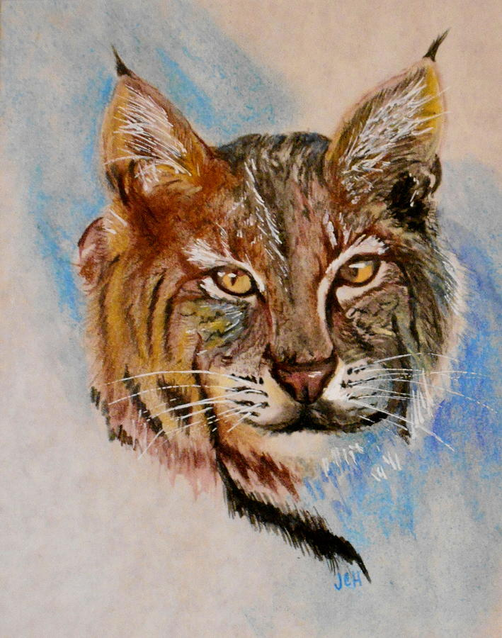 Animal Portrait Painting - Bob Cat by Jean Ann Curry Hess