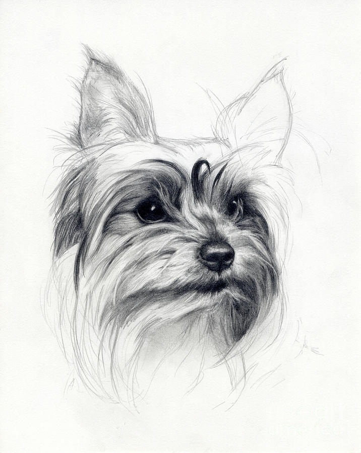 Dog Drawing - Bobby by Tim Thorpe