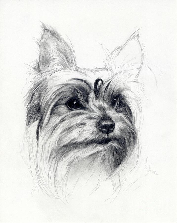 Dog Drawing - Bobby by Tim Thorpe