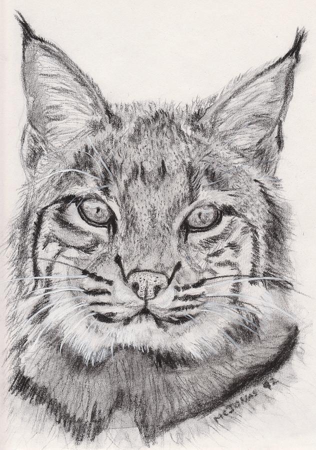 Nature Drawing - Bobcat by Marqueta Graham