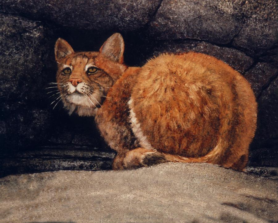 Wildlife Painting - Bobcat On Ledge by Frank Wilson