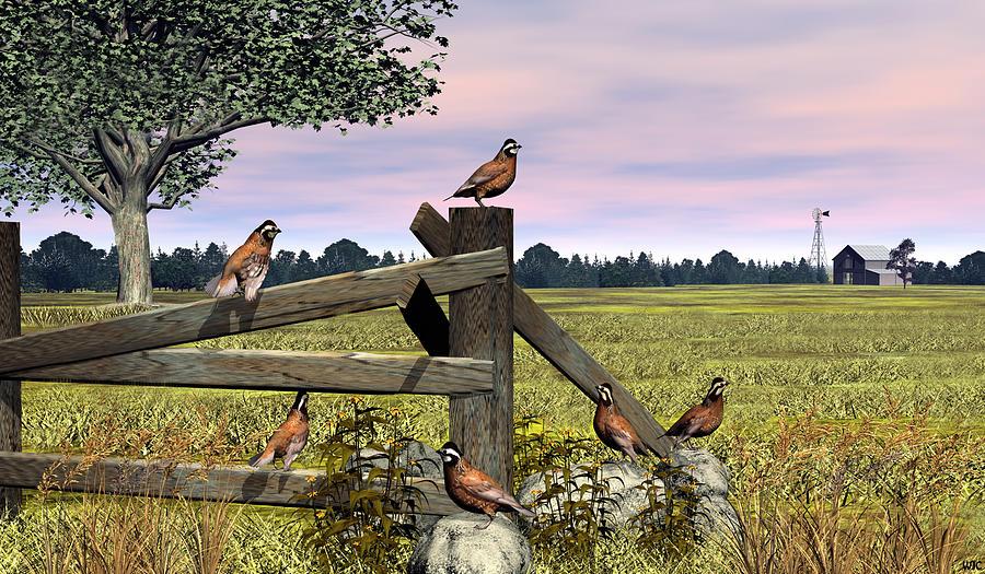 Bird Digital Art - Bobwhite Quail by Walter Colvin
