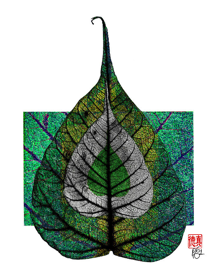Bodhi Leaf by Peter Cutler