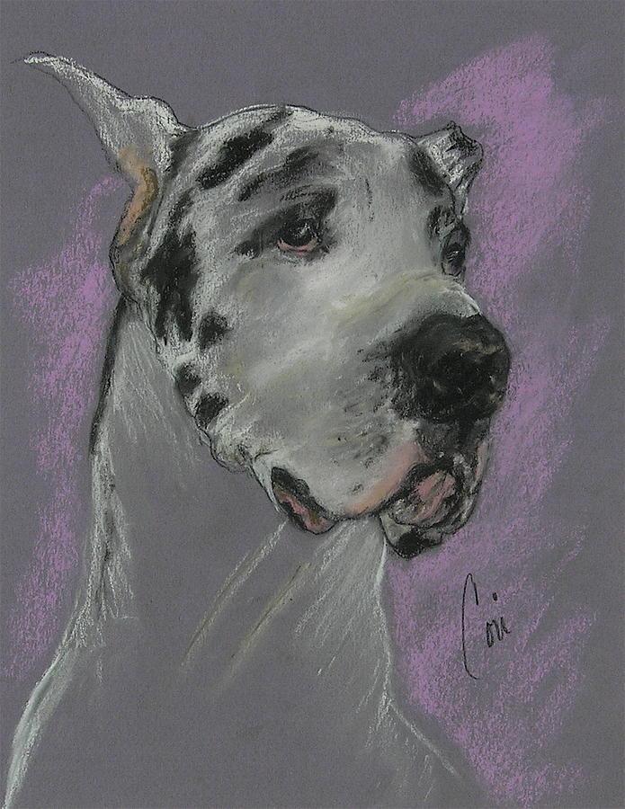 Great Dane Drawing - Bodhis Mystique by Cori Solomon