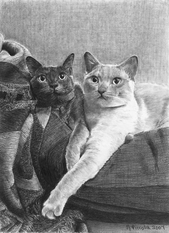 Cats Drawing - Bogey And Bacall by Marlene Piccolin