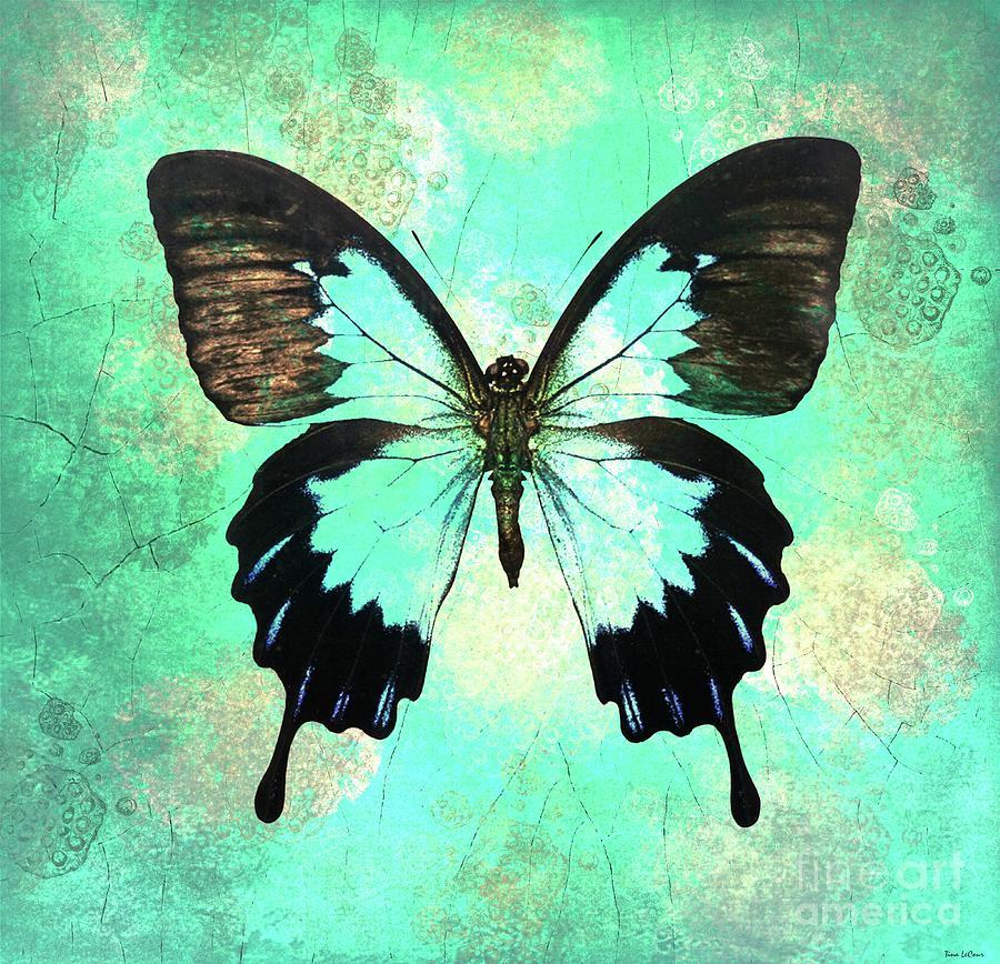Bold Butterfly Digital Art