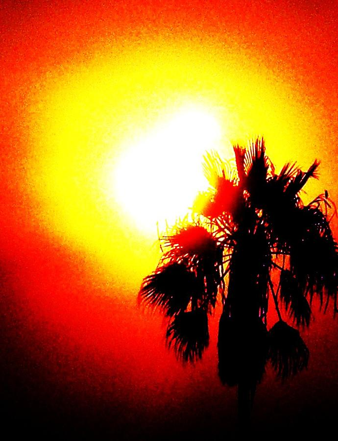 Sun Photograph - Bold by Daniele Smith