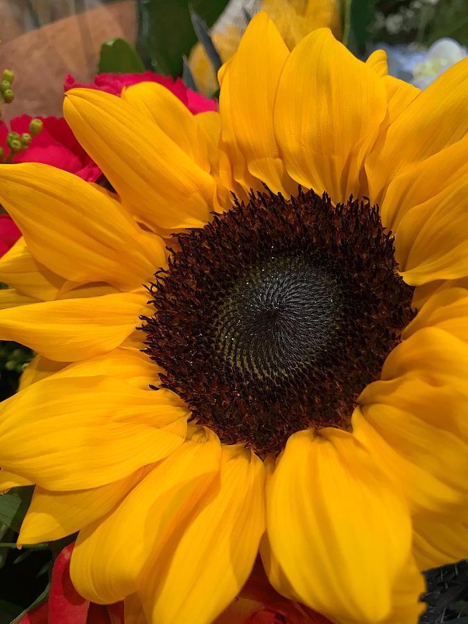 Bold Sunflower by Arlene Carmel