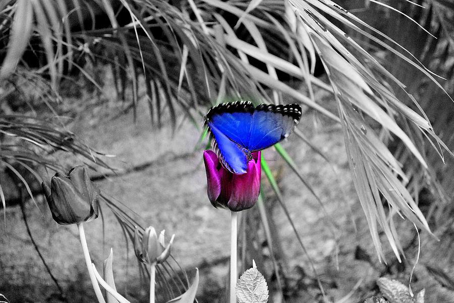 Nature Photograph - Bonding by Stuart  Craft