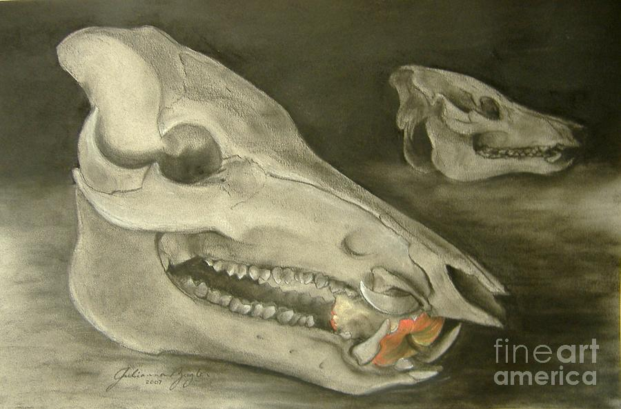 Pig Skull Drawing - Bone Appetit by Julianna Ziegler