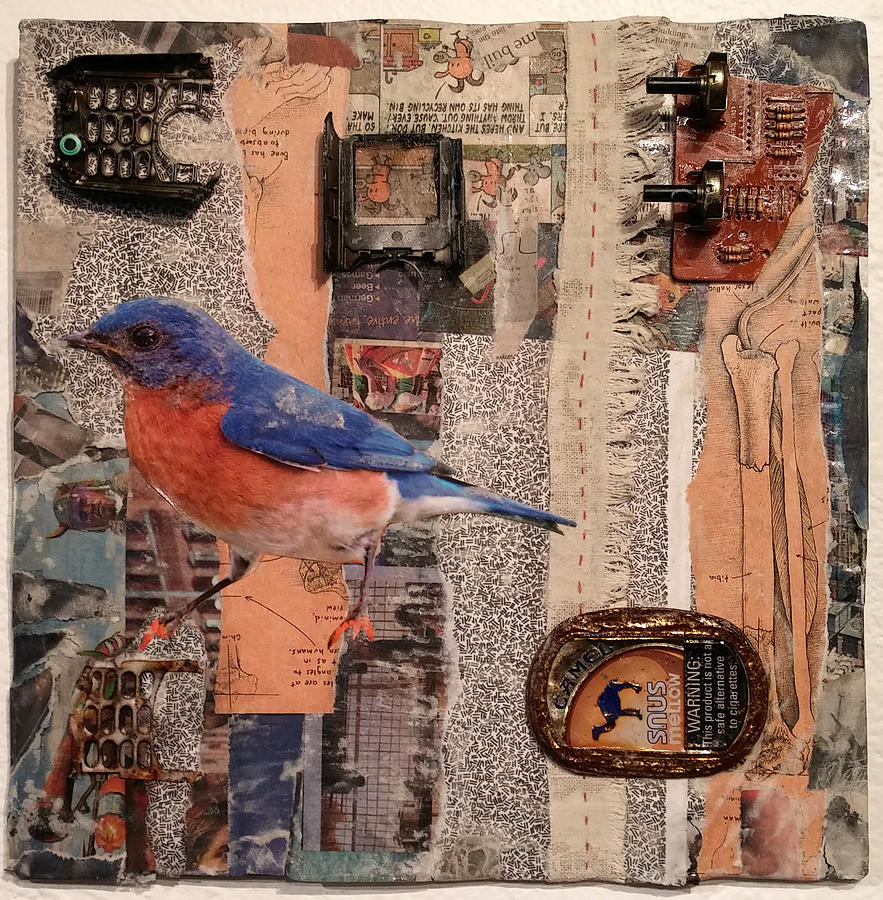 Bird Mixed Media - Bones by Martha Ressler