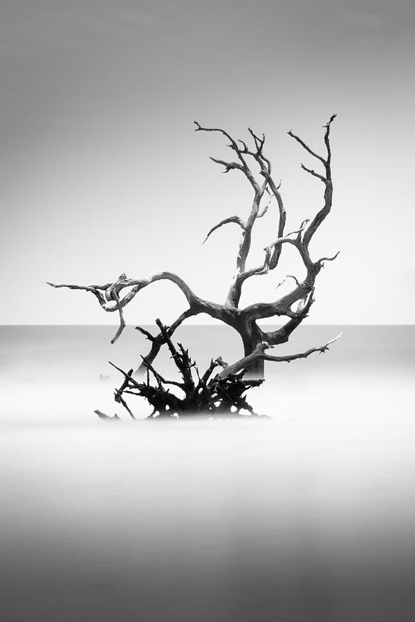 Bulls Island Photograph - Boneyard Beach X by Ivo Kerssemakers
