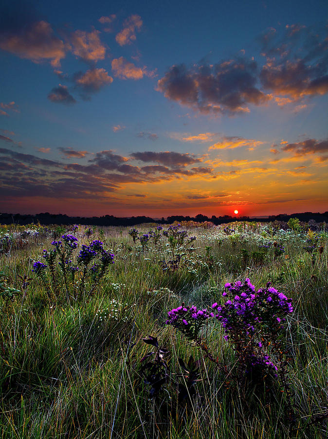 Horizons Photograph - Bonnies Meadow by Phil Koch