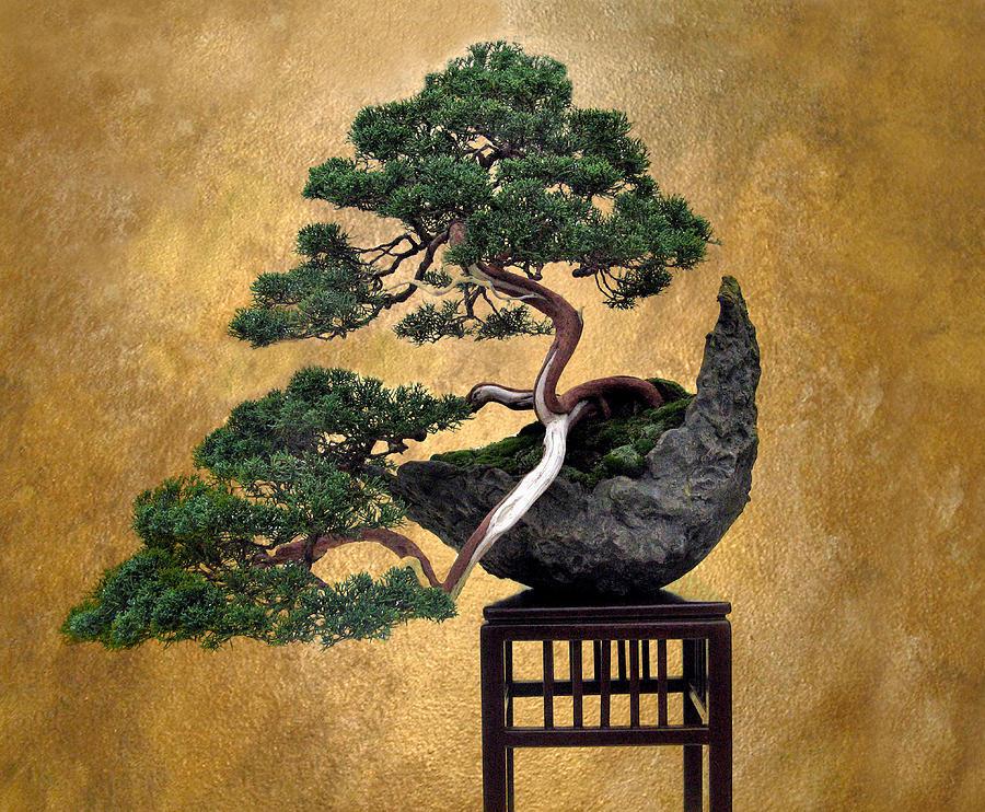 Tree Photograph - Bonsai 3 by Jessica Jenney