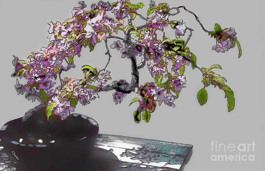 Abstract Photograph - Bonsai Beauty by Linda  Parker