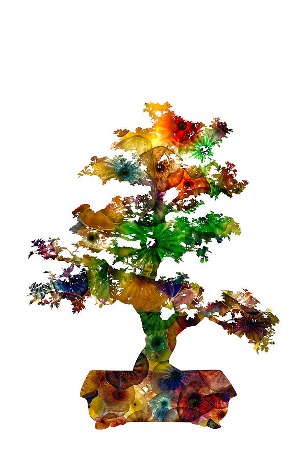 Bonsai by Michael Colgate