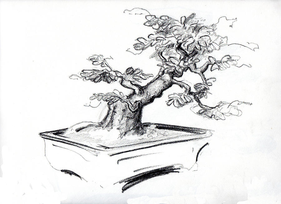 Bonsai Drawing By Thomas Lupari