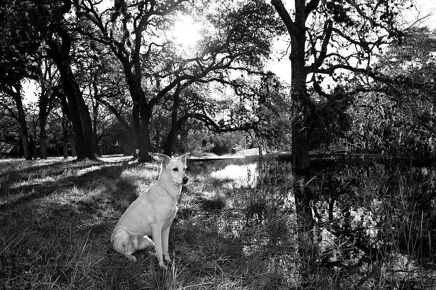 Bw Photograph - Boo Ranch Dog by Jimmy Bruch