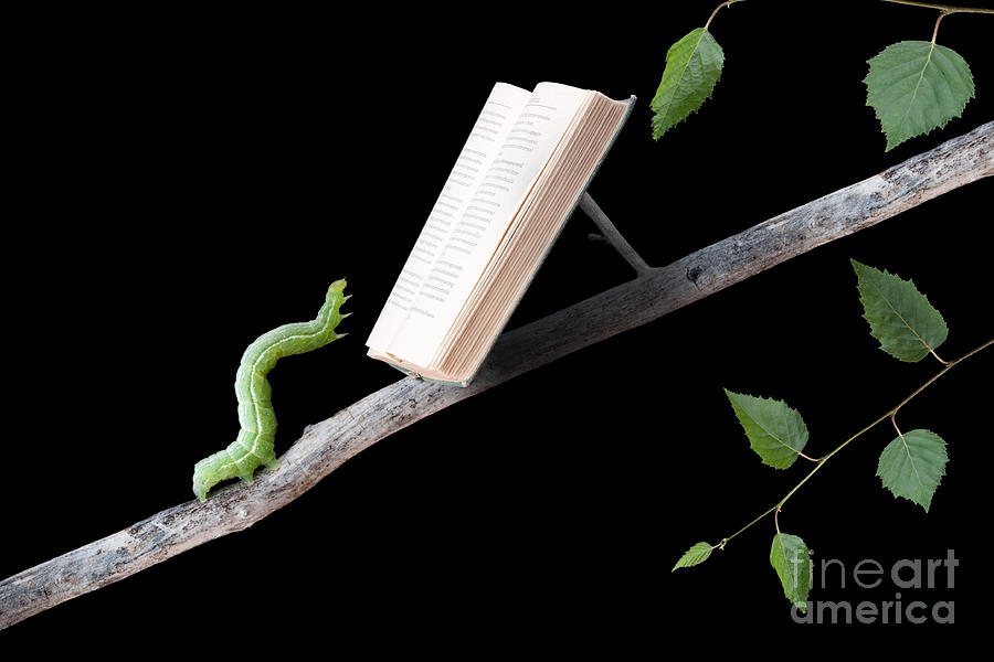 Worm Photograph - Book Worm by Cindy Singleton