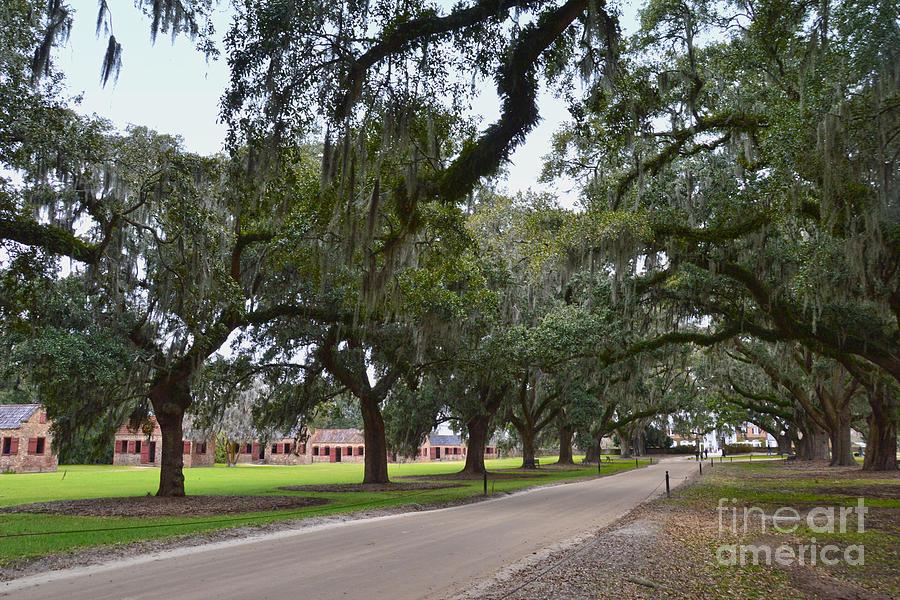 Boone Hall Plantation Photograph