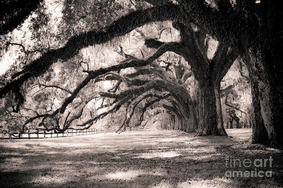 Boone Hall Photograph - Boone Hall Plantation Live Oaks by Dustin K Ryan