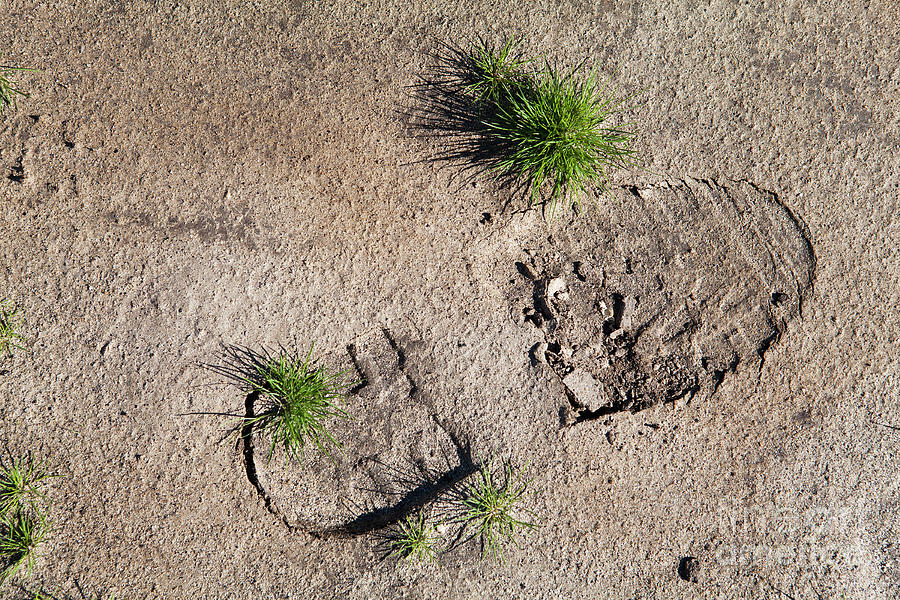 Foot Print Photograph - Boot Print In The Desert by Sharon Foelz