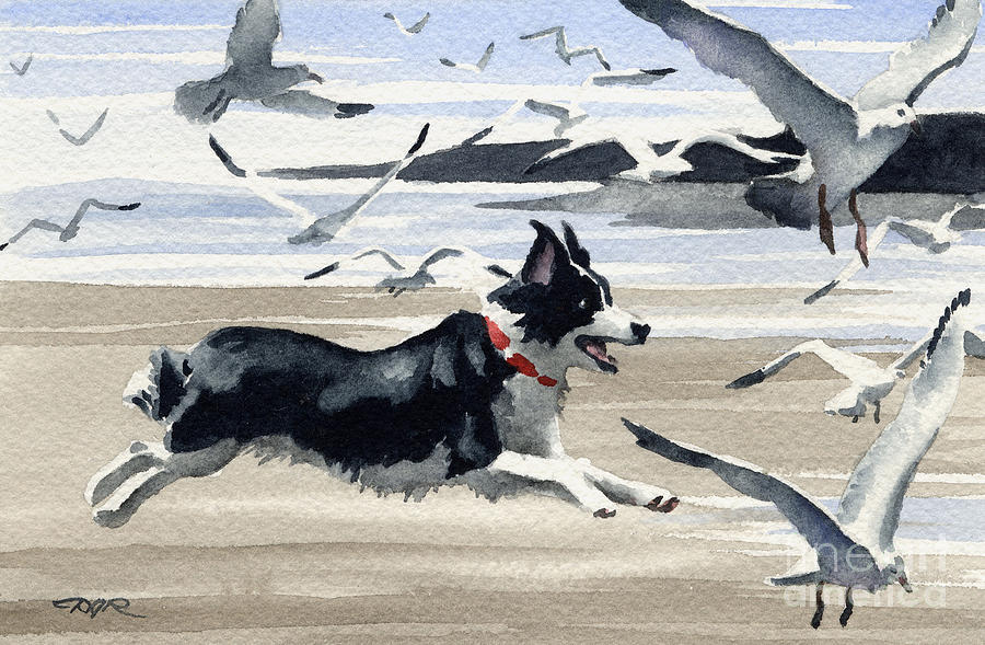 Border Collie At The Beach Painting By David Rogers