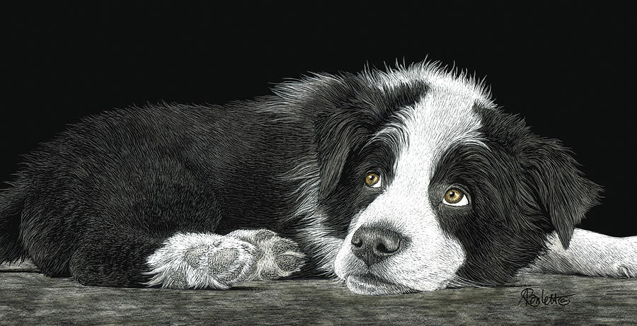 Border Collie Pup for Limited Items by Ann Ranlett