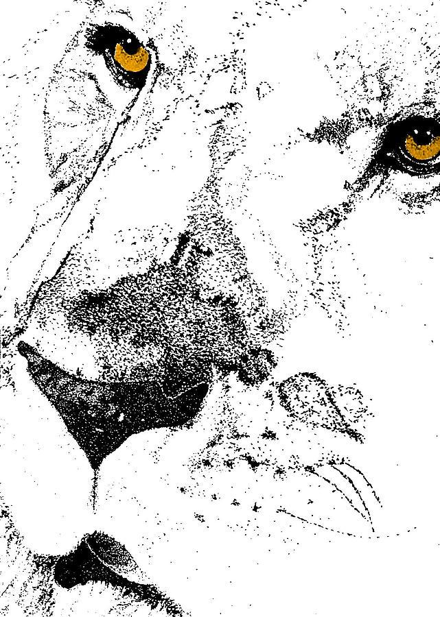 Lion Photograph - Born Free Art by JAMART Photography