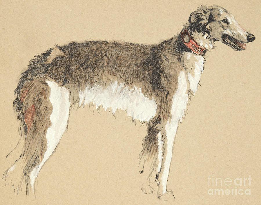 Aldin Drawing - Borzoi, 1930 by Cecil Charles Windsor Aldin