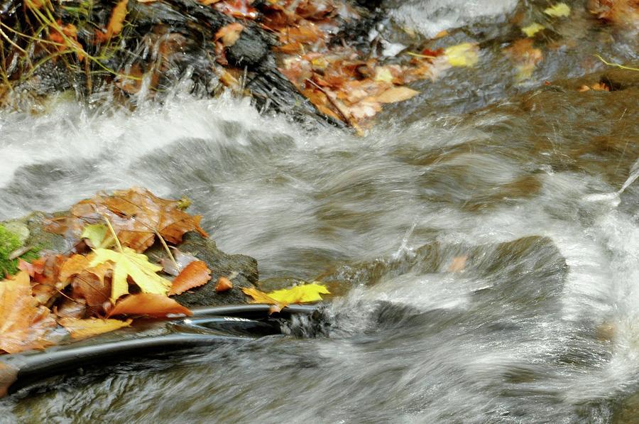 Boscobel Stream Photograph by Cornelia DeDona