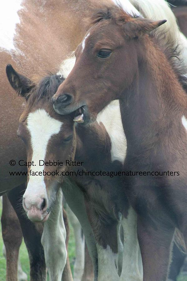 Foals Photograph - Bossy Boots by Captain Debbie Ritter