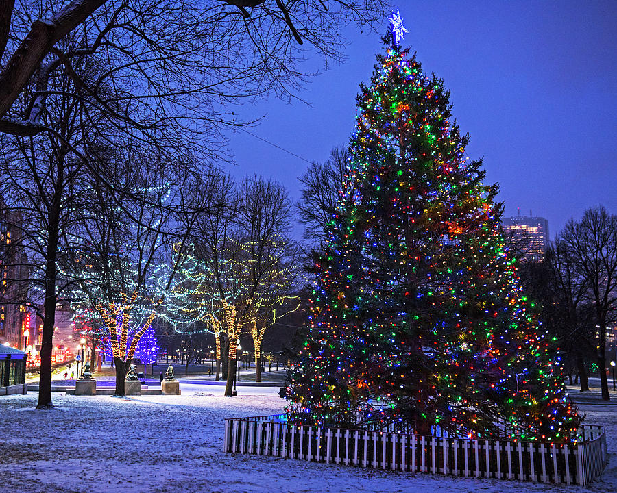 Boston Common Christmas Tree 2017 - Boston Common Christmas Tree 2017 Photograph By Toby McGuire