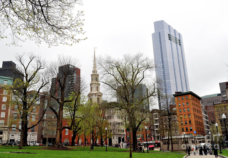 Boston Skyline from the Common by Staci Bigelow