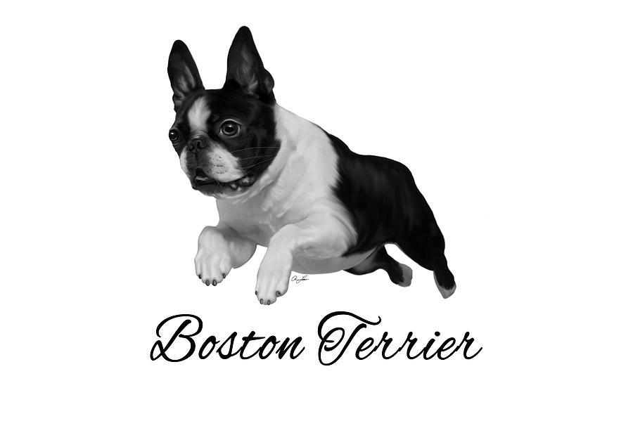 Boston Terrier by Ann Lauwers