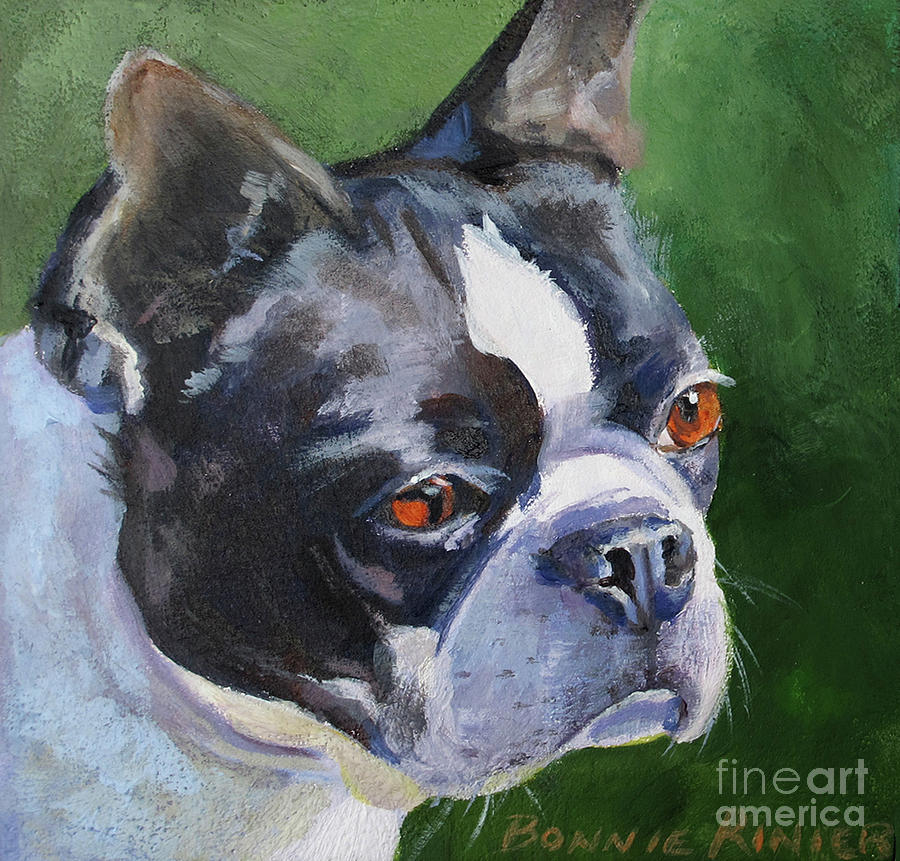 Dog Painting - Boston Terrier by Bonnie Rinier
