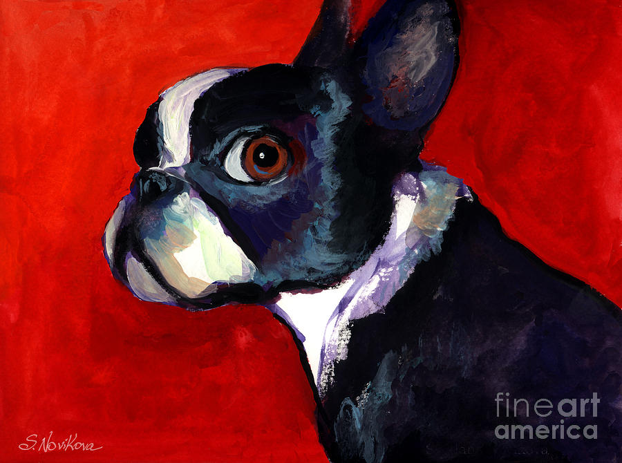 Boston Terrier Painting - Boston Terrier Dog Portrait 2 by Svetlana Novikova