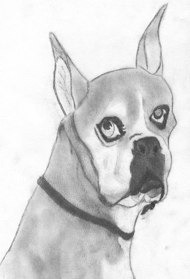 Boston Terrier Drawing - Boston Terrier by Josh Bennett